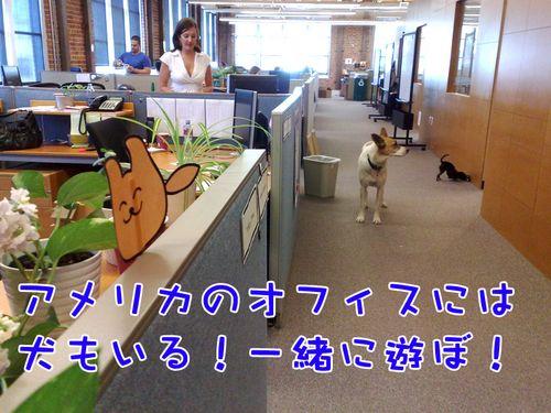 トッフトフ!(アメリカのオフィスには犬もいて楽しいな!一緒に遊ぼ~、と言っている)